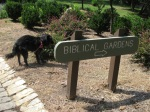 It was unclear what the Biblical Garden would be, but the arrow pointed us towards it.