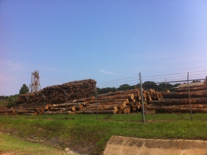 Dead trees. Future paper. Alabama's timber.